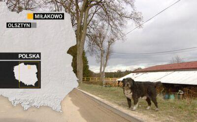 Radni z Miłakowa chcą by psy na spacerze musiały być zawsze na smyczy