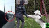 """""""Holował"""" psa za autem. Usłyszał zarzut. Zwierzę odebrane"""