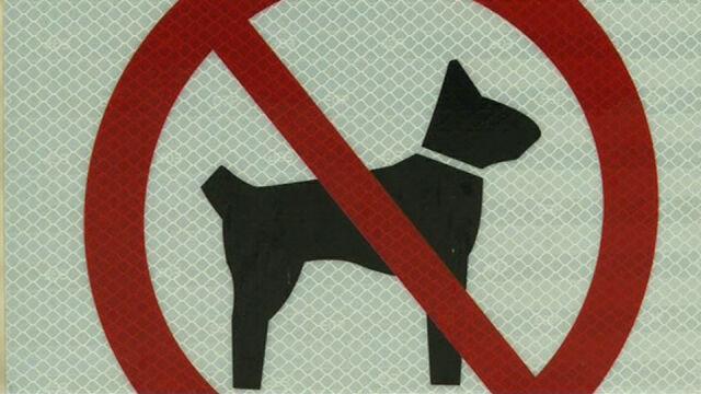 """Przegląd prasy: """"Zakaz wyprowadzania psów"""" bezprawny"""