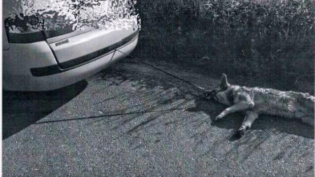 """Na smycz, do zderzaka i jazda. """"Miało nie być sierści w samochodzie"""""""