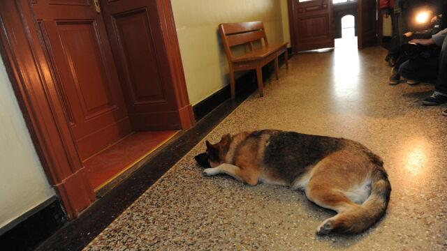 Pies w sądzie