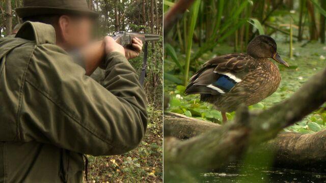 """""""Nie są drapieżnikami, nie są inwazyjne"""". W tym sezonie zginie ponad 100 tysięcy ptaków"""