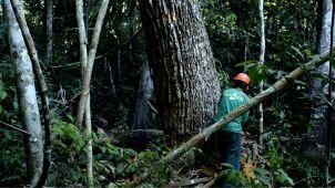 Znika Puszcza Amazońska