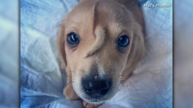 Narwal. Wyjątkowy pies z dodatkowym ogonem