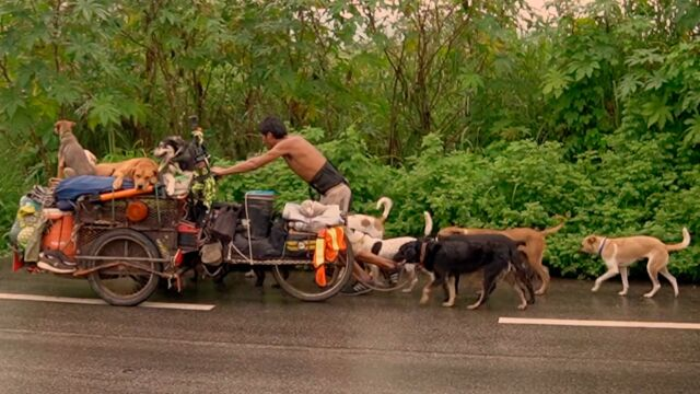 Wraz z 14 psami przemierza kraj,  by ratować ranne zwierzęta