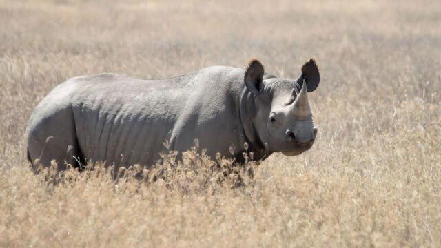 350 tys. dolarów za nosorożca. Kontrowersyjna aukcja w Dallas