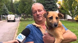 Smutny rekord w krakowskim schronisku. Jednego dnia - 41 psów.