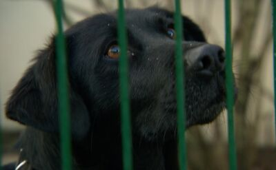 Amerykanie zaostrzają kary za znęcanie się nad zwierzętami