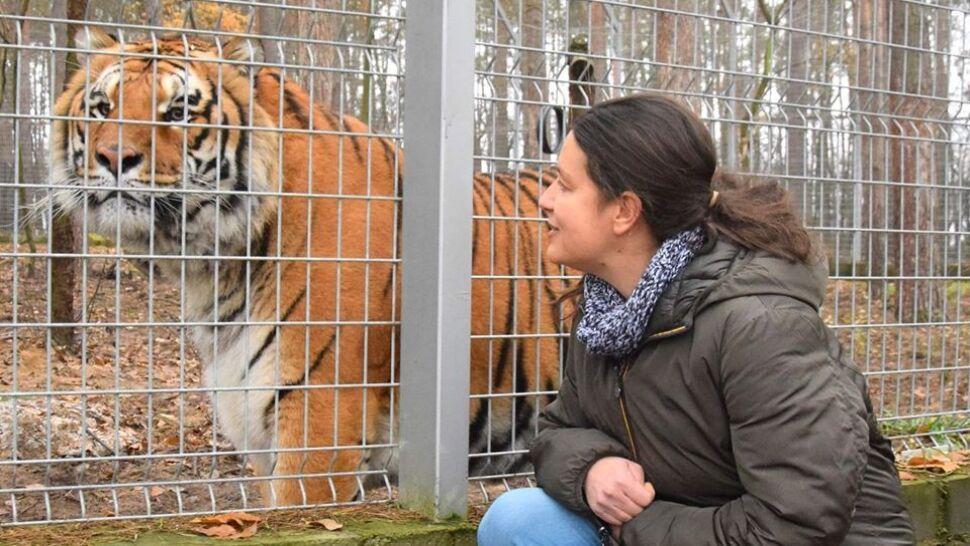 Nie przyjmie nagrody za ratowanie tygrysów. Chce, by  te pieniądze trafiły do przyszłego azylu dla zwierząt