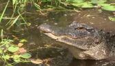 Niejasna przyszłość parku narodowego na Florydzie