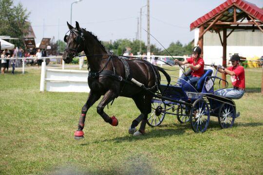 Maraton to wysiłek dla ludzi i koni