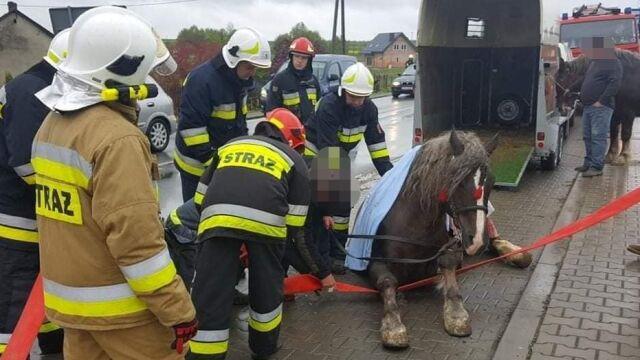 """Koń """"dostał skurczu i wypadł z przyczepy"""""""