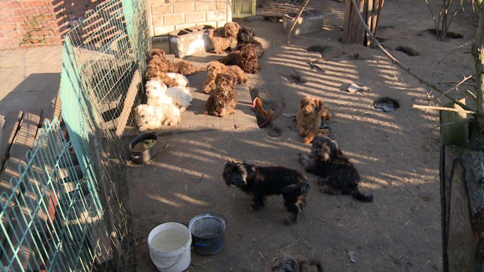 Nietypowe zadanie sądu, musiał znaleźć domy dla 65 psów