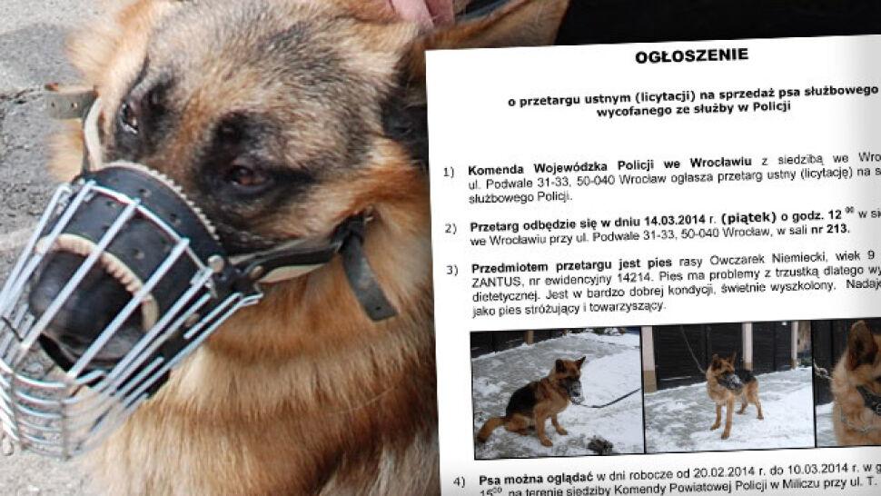 Zakończył służbę w policji, wystawili go na sprzedaż. Cena wywoławcza za psa 263 złote