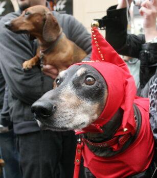 Jamniczy Marsz Floriańską Do Sukiennic