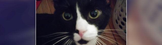 Kot Felix został wyprany w pralce. Stracił wzrok, ma liczne obrażenia