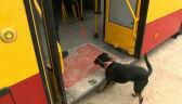 Schronisko dla zwierząt w Warszawie otrzymało autobus
