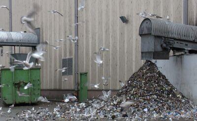 Bornholm chce być ekologicznym pionierem