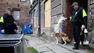 """""""Tak strasznie się wodą cieszył"""". Uwolnili psa, którego właściciel wyjechał"""