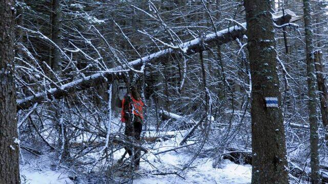 Tatry po halnym. Powalone drzewa, nieprzetarte szlaki