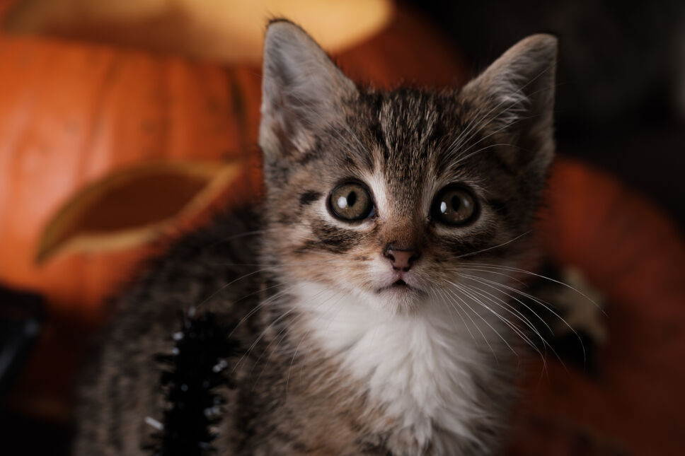 Kocięta były wdzięcznymi modelami