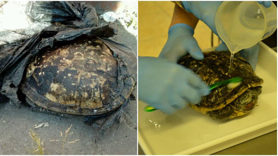 Żółw w foliowej torbie trafił na śmietnik, wcześniej ktoś się nad nim znęcał