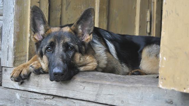 Psa powiesił na drzwiach od stodoły. Prokuratura chce więzienia, oprawca się zgadza