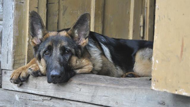 Głodził psa, przebił mu płuco, na końcu powiesił. Wyrok: bezwzględne więzienie