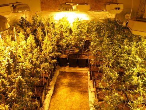 Zabezpieczono 226 roślin