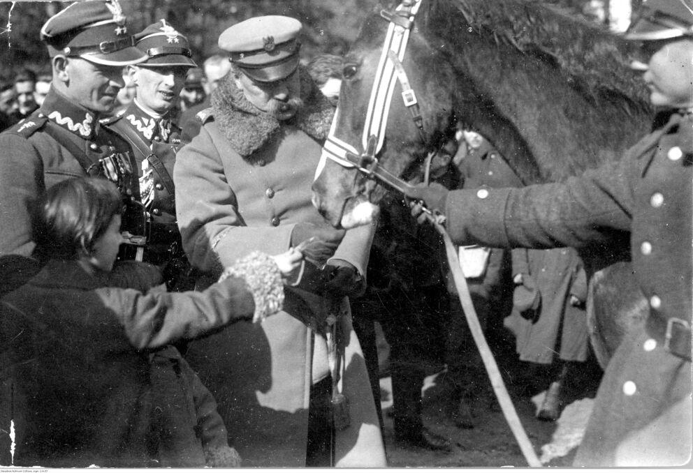 """Album """"100x100"""": Kasztanka Marszałka Piłsudskiego (sygn. 1-A-37) - 209 polubień"""