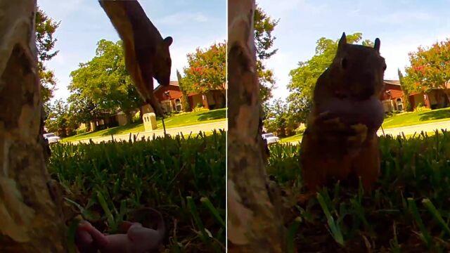Dzielna mama uratowała wiewiórkę