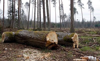 Komisja Europejska wzywa do zaprzestania wyrębu w Puszczy Białowieskiej