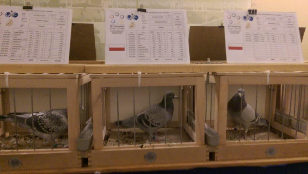 Olimpiada gołębi pocztowych w Brukseli, styczeń 2017
