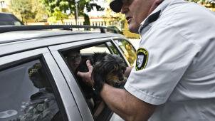 Zostawiła psa w aucie, na zewnątrz było ponad 30 stopni. Uratowali go strażnicy