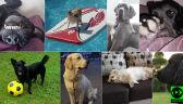 Reporterzy 24 pokazują swoje psy