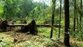 Las jest niemal doszczętnie zniszczony