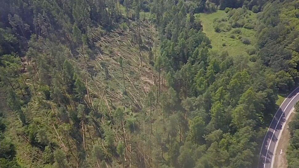 """Trąba powietrzna zniszczyła las. """"Drzewa połamane jak zapałki"""""""