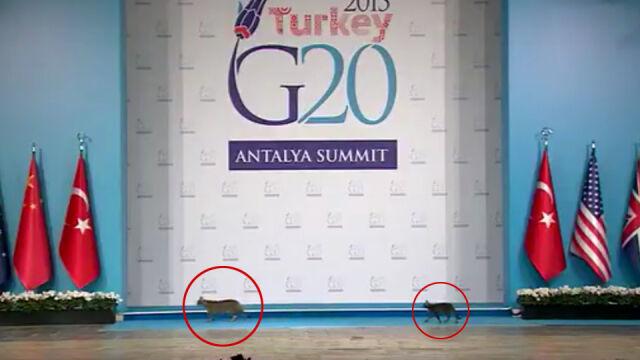 """Trzy koty na scenie, czyli """"jedyne rozsądne wystąpienie"""" podczas szczytu G20"""