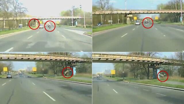 Jeleń strącił jadącego motocyklistę