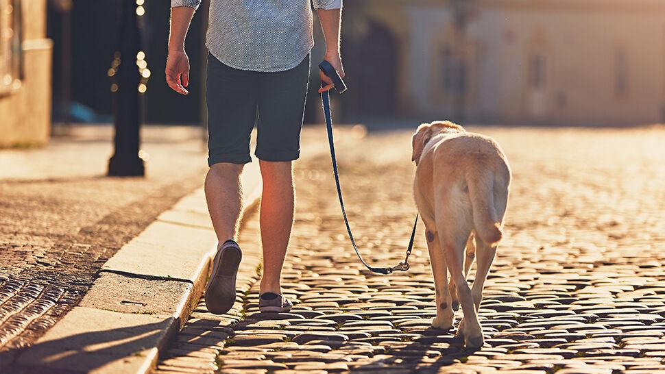 """""""Właściciel psa ma prawo z tym psem się poruszać"""". Sąd uznał, że zakaz był przesadny"""