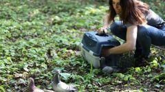 Gołębie na wolności