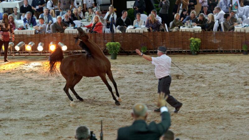 43. aukcja koni w Janowie Podlaskim