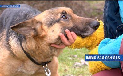Imbir szuka nowego domu
