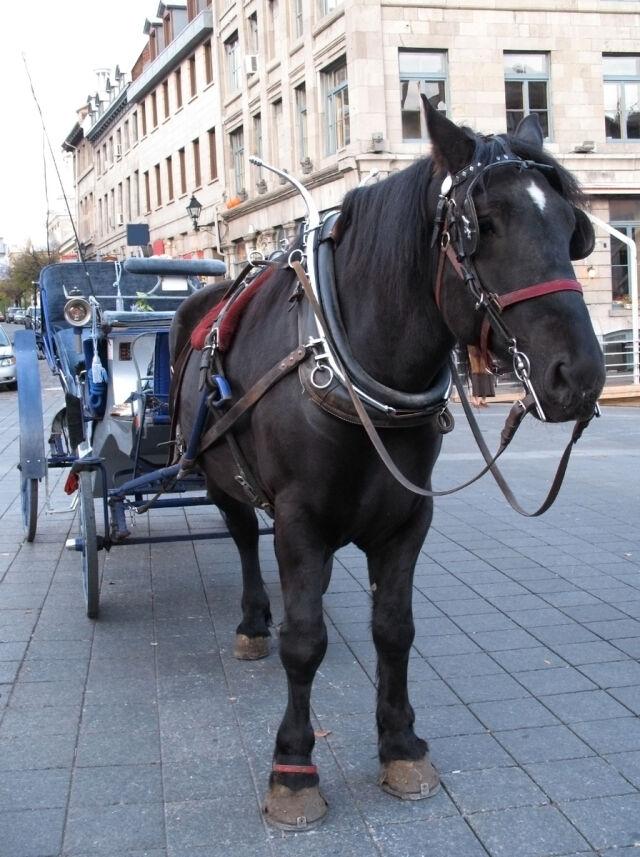 Śledczy sprawdzą dorożki, a weterynarze konie
