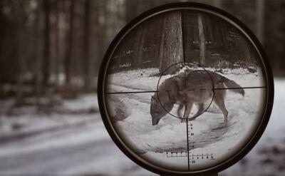 Dopaść wilka