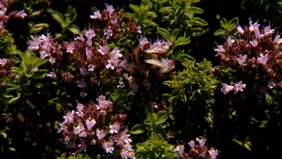 Gigantyczne kary za zabicie pszczoły w Niemczech