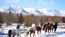 Życie na północy Islandii
