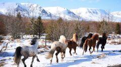 W gospodarstwie jest 40 koni, trzeba je wypuszczać na przebieżki