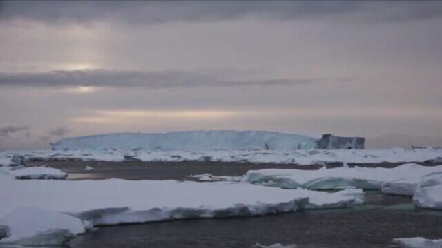 Selma dobiła do brzegów Zatoki Wielorybów