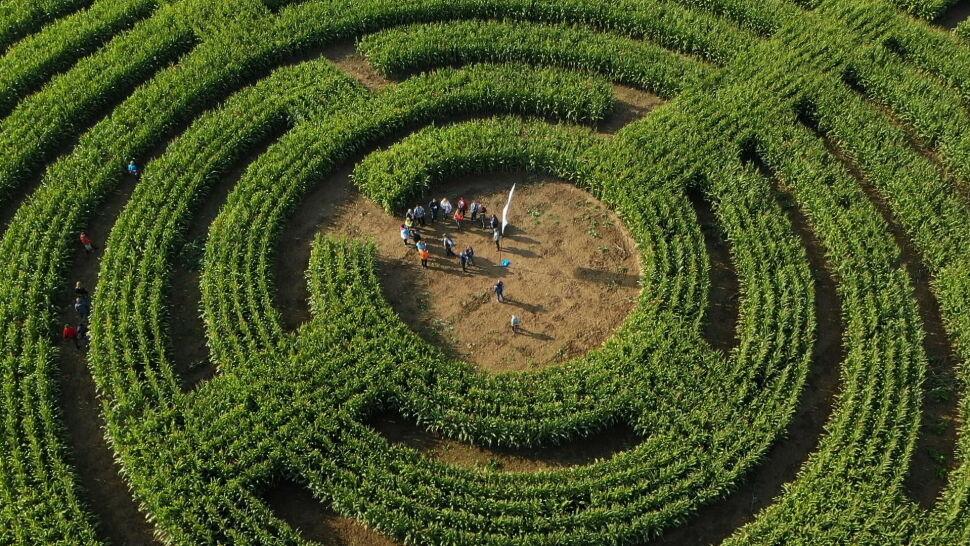 """Rolnicy stworzyli kukurydziany labirynt. """"Niezły tor przeszkód"""""""